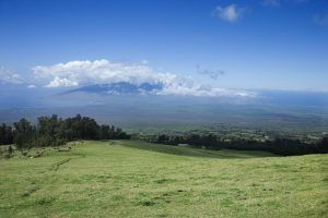 Up Country Maui