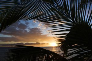 Kihei Sunset thru Palms