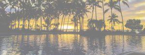 palm-sunset-yellow-copy